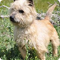 Adopt A Pet :: Bucky - Acton, CA