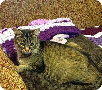 Domestic Mediumhair Cat for adoption in Eureka, California - Monet