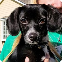 Adopt A Pet :: Gabby - Rock Hill, SC
