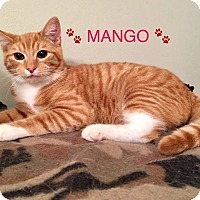Adopt A Pet :: MANGO aka CHARLIE - Hamilton, NJ