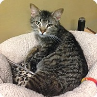 Adopt A Pet :: Edgar - Byron Center, MI