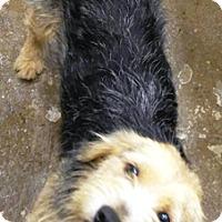 Adopt A Pet :: Tucker - Oswego, IL