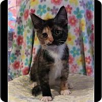 Adopt A Pet :: Ella - Waldorf, MD