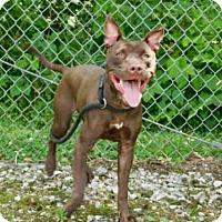 Adopt A Pet :: ROXY - Belleville, IL