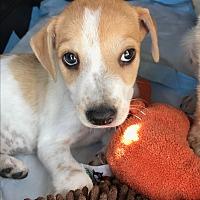 Adopt A Pet :: Netty - New York, NY