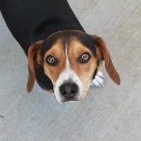 Adopt A Pet :: Thunder - Russellville, KY