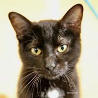 Adopt A Pet :: Mamacita - Carrollton, TX