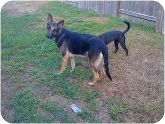 German Shepherd Dog Dog for adoption in Houston, Texas - Alex