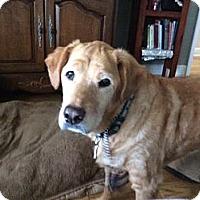 Adopt A Pet :: Parker - Jacksonville, FL