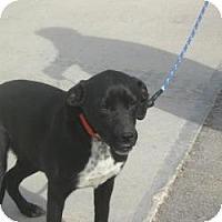 Adopt A Pet :: Midnight - Paintsville, KY