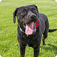 Adopt A Pet :: Titus - West Richland, WA