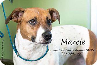 Hound (Unknown Type) Mix Dog for adoption in La Porte, Indiana - Marcie