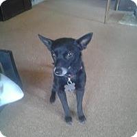 Adopt A Pet :: Gypsy Rose - Upper Sandusky, OH