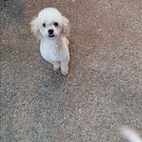 Adopt A Pet :: Beamer - Alpharetta, GA