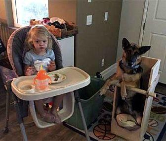 German Shepherd Dog Dog for adoption in Mira Loma, California - Miata