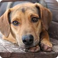 Hound (Unknown Type) Mix Dog for adoption in Yukon, Oklahoma - Jeremy