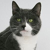 Adopt A Pet :: Jasmine - Republic, WA