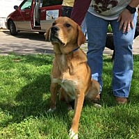 Hound (Unknown Type) Mix Dog for adoption in Allentown, Pennsylvania - Buster Lane