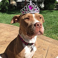 Adopt A Pet :: Princess Lucy - St Louis, MO