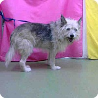 Adopt A Pet :: URGENT 7/29 @ DEVORE - San Bernardino, CA