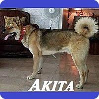 Adopt A Pet :: Akita - Little Rock, AR