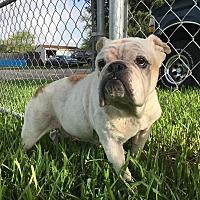 Adopt A Pet :: Grace - Lakeland, FL