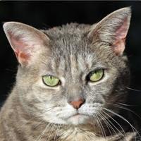 Adopt A Pet :: Cassie 22718-c - Ithaca, NY