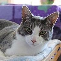 Adopt A Pet :: Zazu (+ Snowball) - Richmond Hill, ON