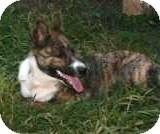 Border Collie Mix Dog for adoption in Remlap, Alabama - Cookie
