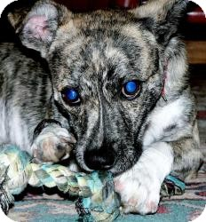 Jack Russell Terrier/Whippet Mix Dog for adoption in Marion, North Carolina - Molly