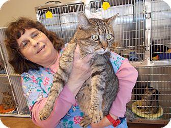 Domestic Shorthair Cat for adoption in Heber Springs, Arkansas - Tucker