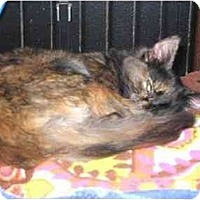 Adopt A Pet :: Astrid - Westfield, MA