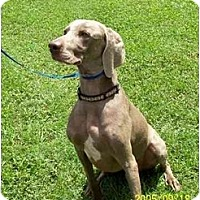 Adopt A Pet :: Mylo  *ADOPTION PENDING* - Eustis, FL