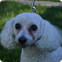 Adopt A Pet :: Angel~Adopted! - Troy, OH