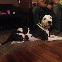 Adopt A Pet :: Raj - Centerburg, OH