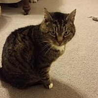 Adopt A Pet :: Cuddles - Springfield, OR