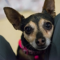 Adopt A Pet :: Tina - Grass Valley, CA