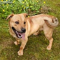 Adopt A Pet :: Squirt - Ashland, VA