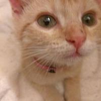 Adopt A Pet :: A437901  Bailey - San Antonio, TX