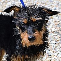 Adopt A Pet :: Allan - Middlebury, CT