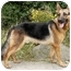 Photo 4 - German Shepherd Dog Dog for adoption in Los Angeles, California - Darcy von Hariton