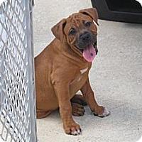 Adopt A Pet :: Jake - Minneola, FL