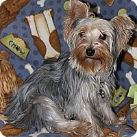 Adopt A Pet :: Willow - Greenfield, IN