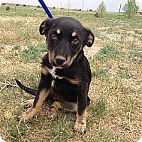 Adopt A Pet :: Play - Westminster, CO