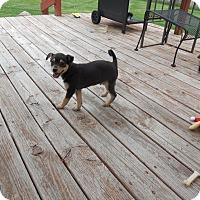 Adopt A Pet :: Batman - Shawnee Mission, KS