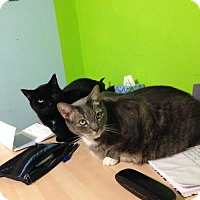 Adopt A Pet :: Oliver and Stanley - COURTESY POST - Baltimore, MD
