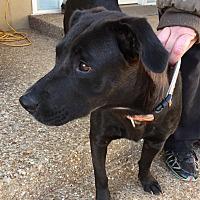 Adopt A Pet :: Hope - Mt juliet, TN