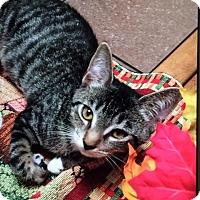 Adopt A Pet :: Shiloh - Virginia Beach, VA