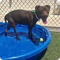Adopt A Pet :: Picasso - Phoenix, AZ