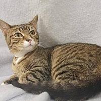 Adopt A Pet :: Gretel - Mt Vernon, IN